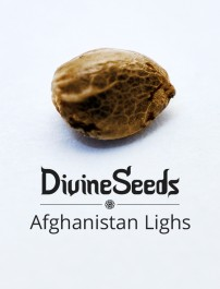 Afghanistan Lighs