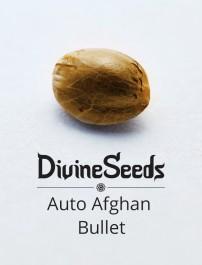 Auto Afghan Bullet