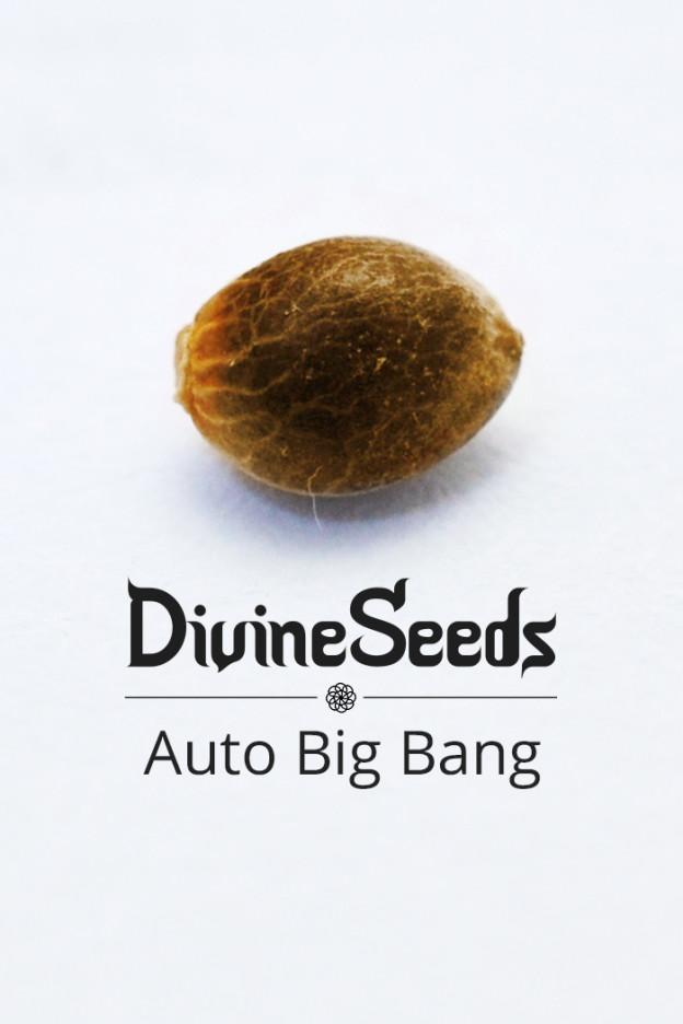Auto Big Bang