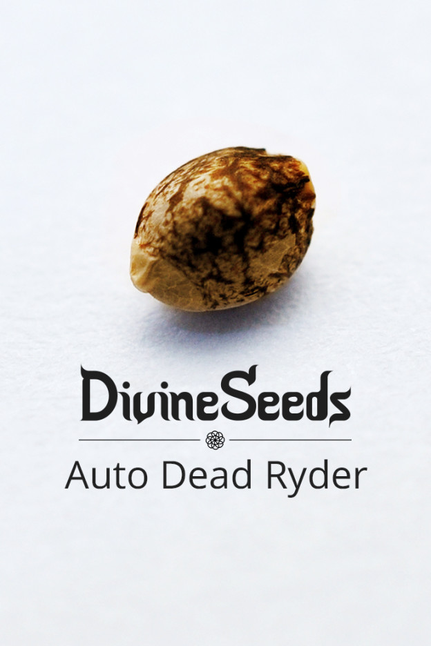 Auto Dead Ryder