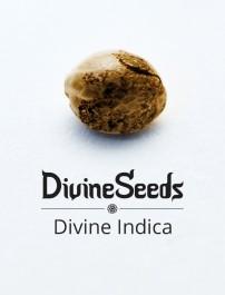 Divine Indica